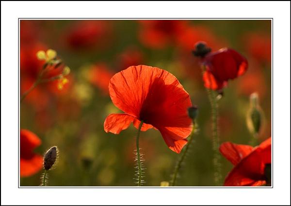 Crimson Tide 2 by phil_j