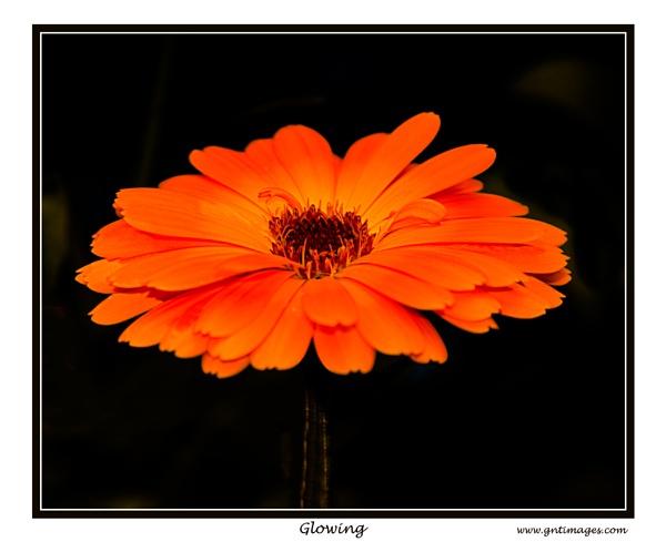Glowing by GlynnisFrith