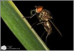 Bubblegum Fly by Night