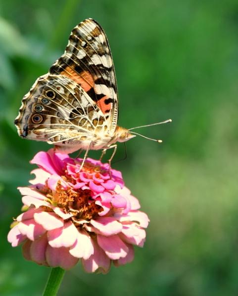 Buttleflies by HectorRivera