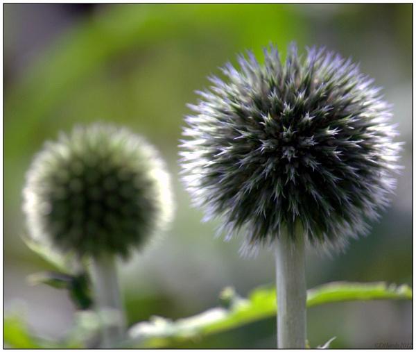 Spikey Spheres