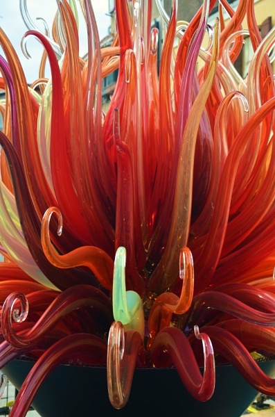 Red Hot Murano Lilly by hippysnapper