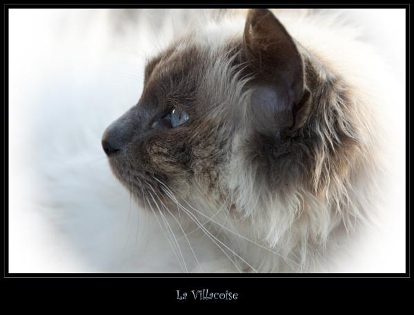 La Villacoise by born2bongo