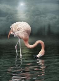 Flamingo dream..
