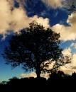 Sunset Tree by daveiz4d