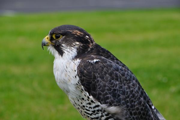 Birds by kiwi3636