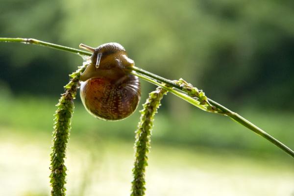 A Snail Feeding by tyronet2000