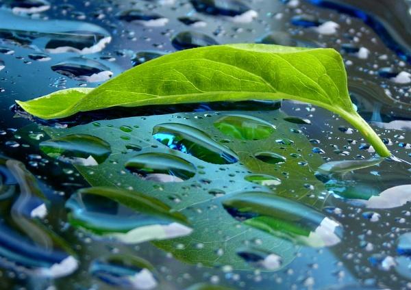 Lilac leaf by Digger13