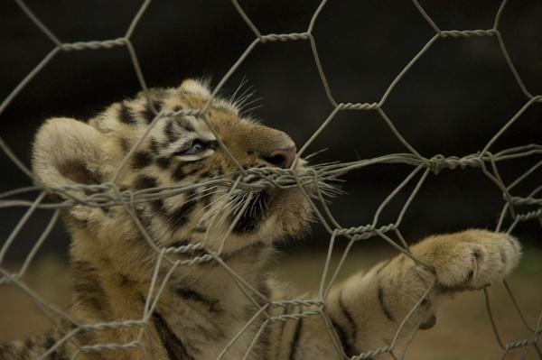 Captivity by lollipop_lass