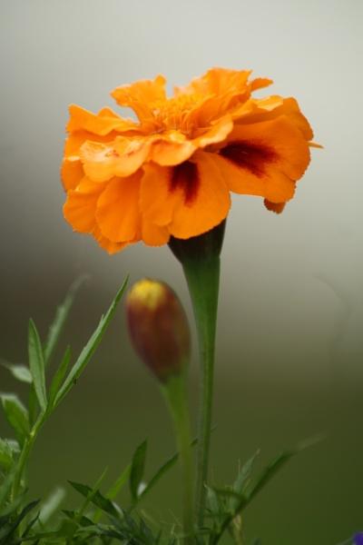 flower by lez68