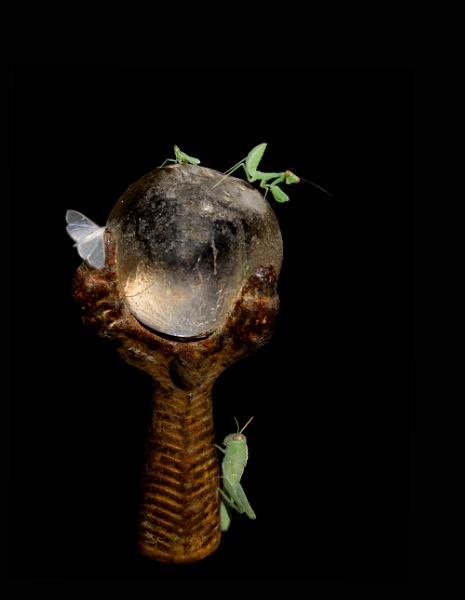 Sphere of evolving life