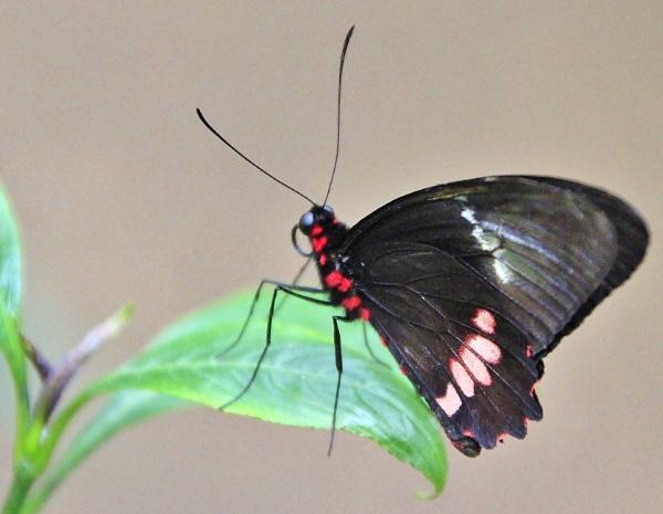 Edinburgh Butterfly World. by Adrianwalker