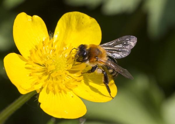 Busy Bee by MarkBullen