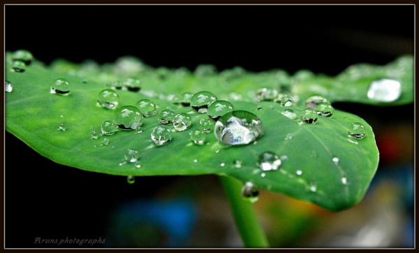 Rain drops by Arunpurushotham