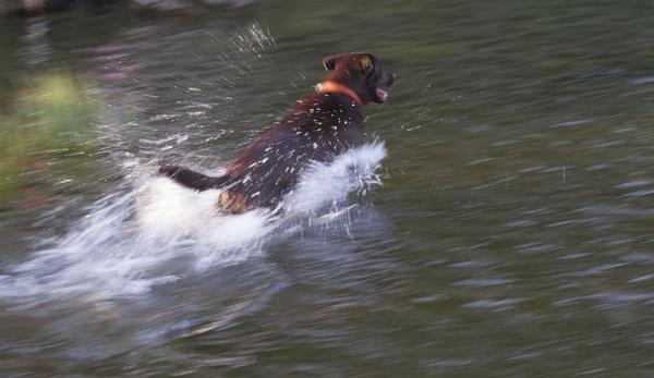 Splash by danbrann