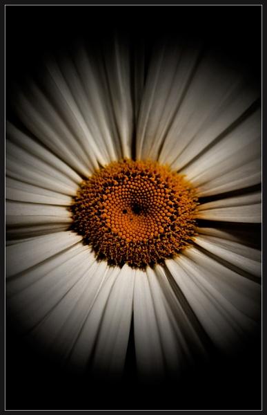 Daisy Sun by Morpyre