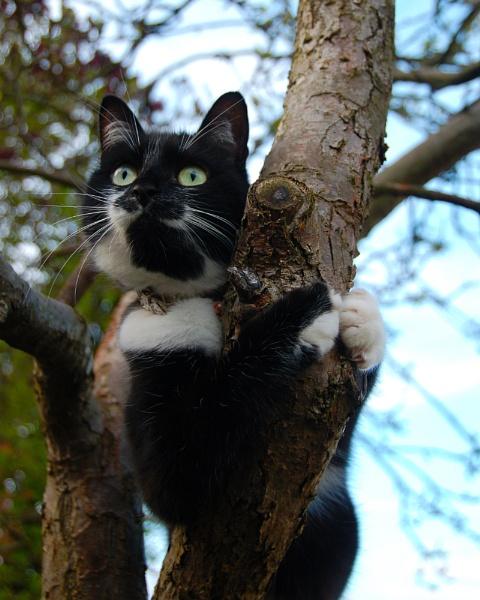 Tree Hugging Kitty by cymroDan
