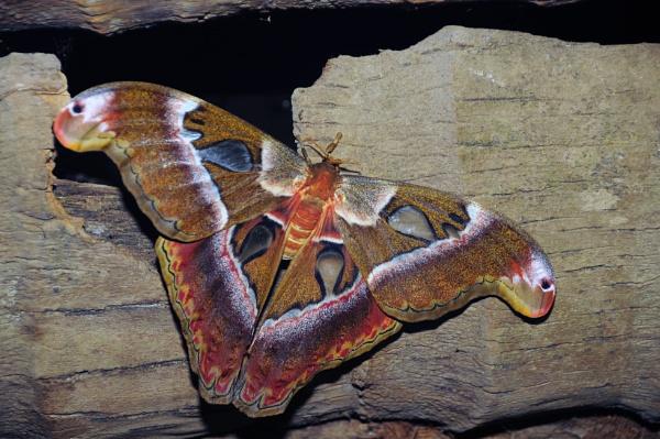 Giant Moth by walk8