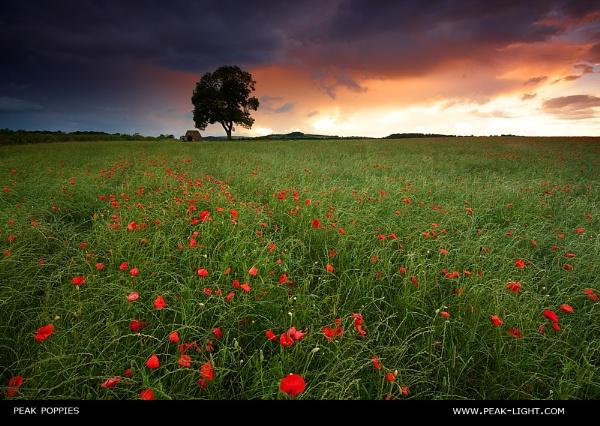 Peak Poppies by martinl
