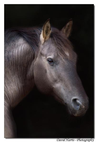 Chief - The wild stallion by johnjo58
