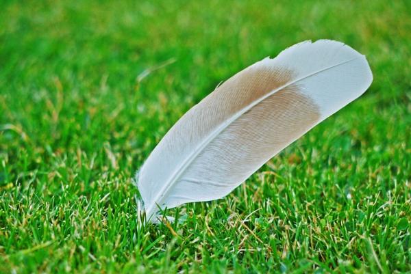 Feather by notsuigeneris