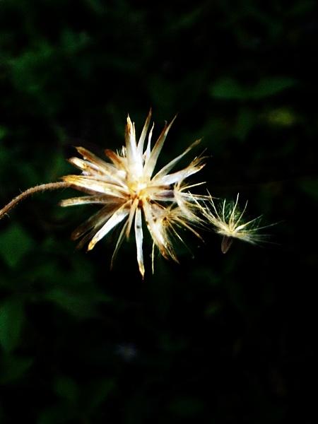 Flower by arhab