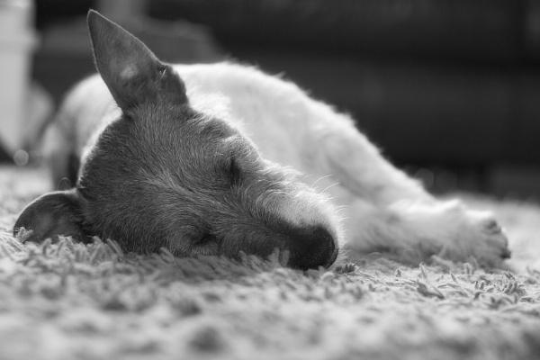 Eddies afternoon nap by marklewis81
