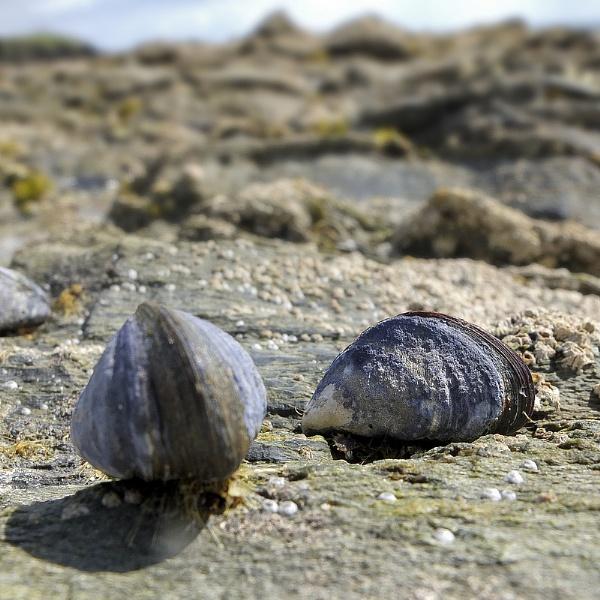 Mussel beach by NikLG