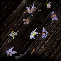 Flowers and slates