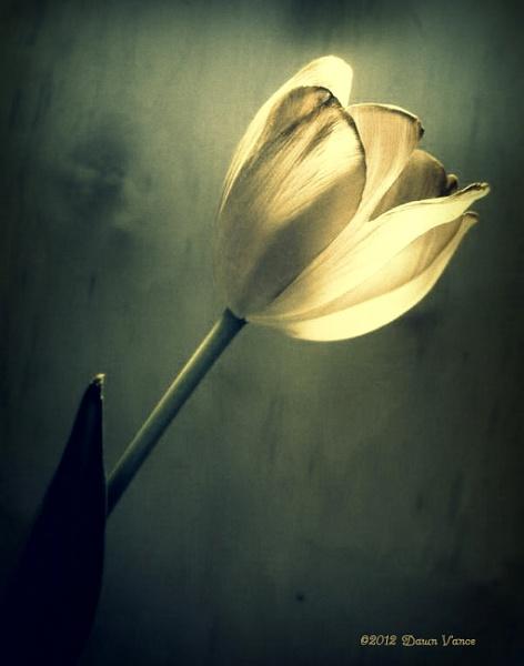 Inner Light by dawnmichelle