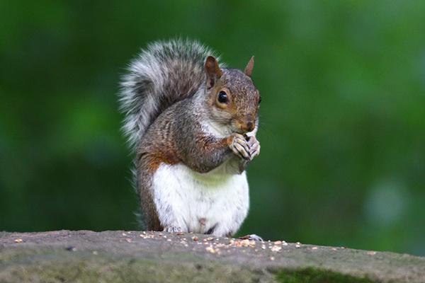 Feeding squirrel by snoozle