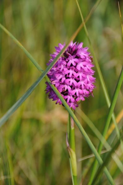 Purple Gem by jholmes