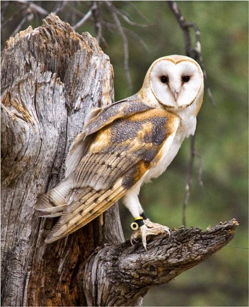 Owl by Daisymaye