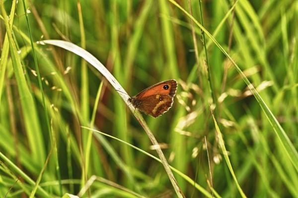 Butterflies by rick9449