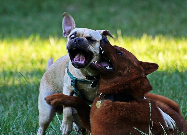 Dog play by mishu78