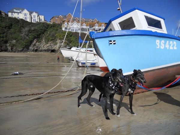 pirates about by blackgreyhound