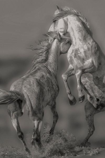 Stallions playing by Msalicat