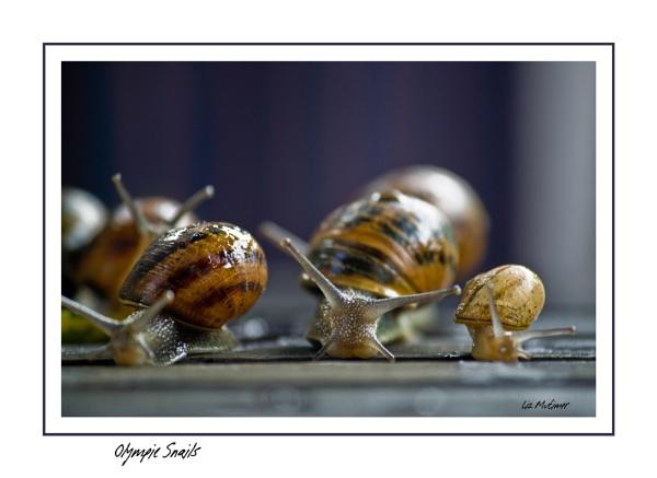 Olympic Snails by LizMutimer