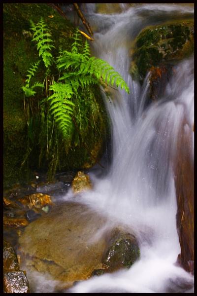 WaterFern by iscramble