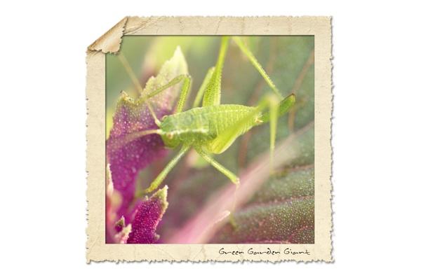 Green Garden Giant by NDODS