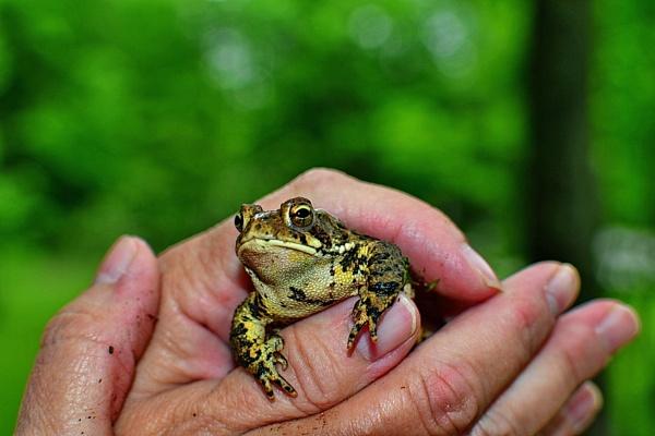 Froggie by rjheat
