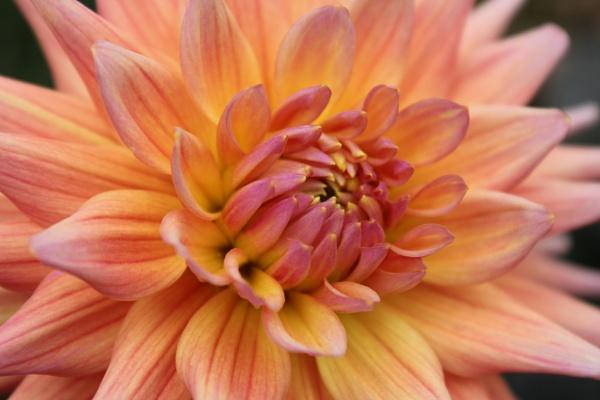 Floral Fusion by KIWIGIRL78