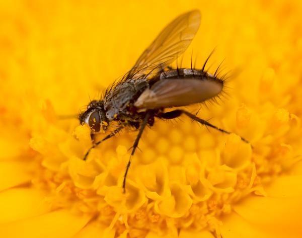 Macro Insect at Kew Gardens by pmeswani