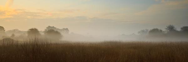 Hatfield Mist by hammermad