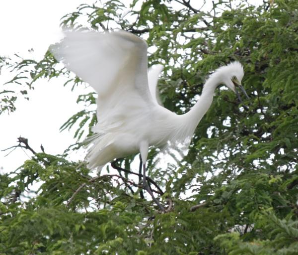 landing in peace by Aayush