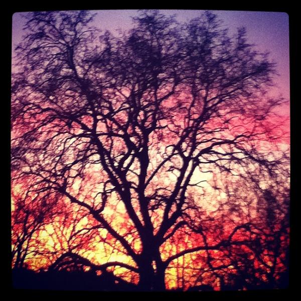 tree at sunset by Hannah_Rushton