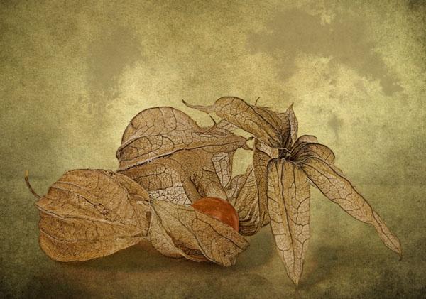 Seed pods by JenniCh