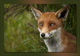 Foxy Fun Day