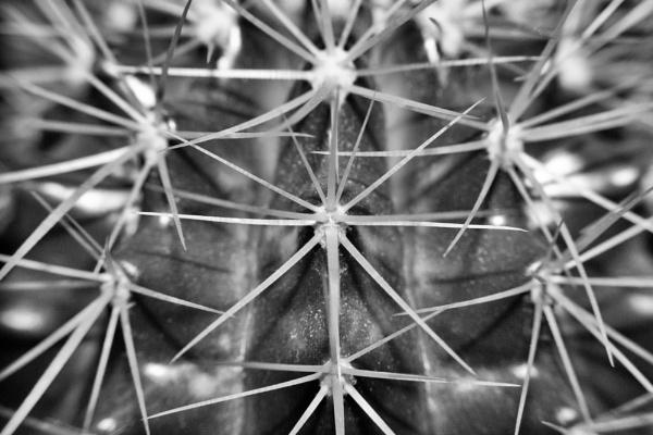 Cactus by wap69