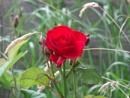 lovely flower waiting for summer